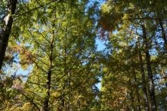 めい想の森メタセコイヤ