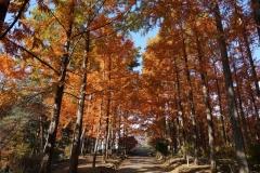 めい想の森1