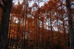 めい想の森 (3)