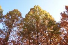 めい想の森2