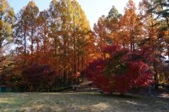めい想の森3