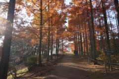 めい想の森